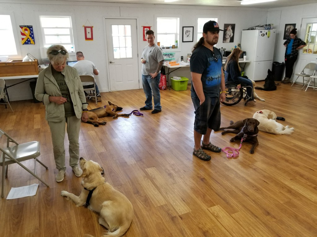 Group dog training at Peggy Moran's School for Dogs, LLC